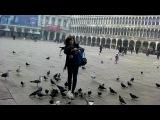 Венеция. Кормление чаек и голубей